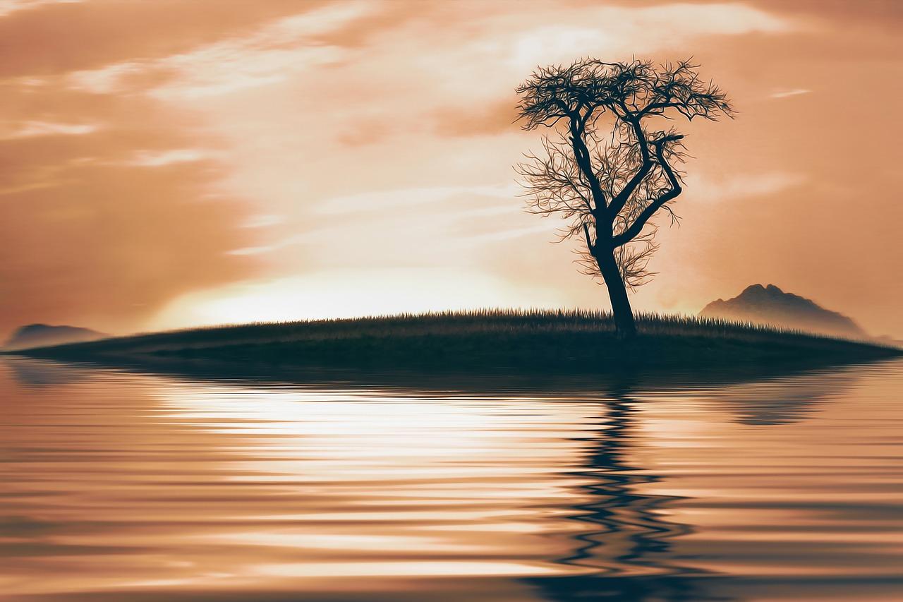 arbol-lago