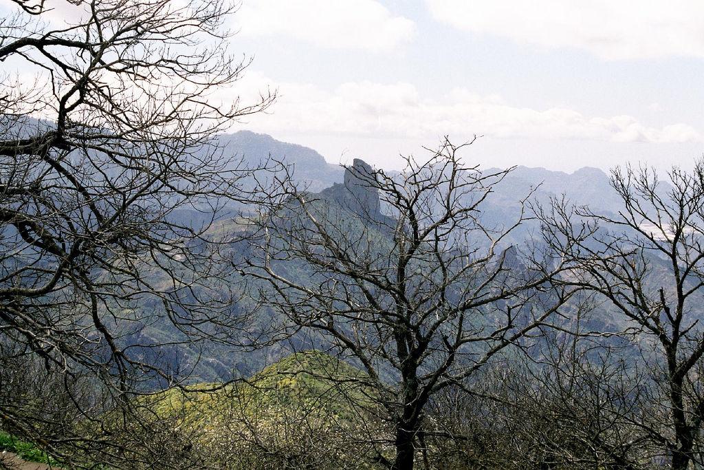 Vista del Roque Bentayga entre almendros desde la Cruz de Tejeda (Gran Canaria). Por Pepelopex.