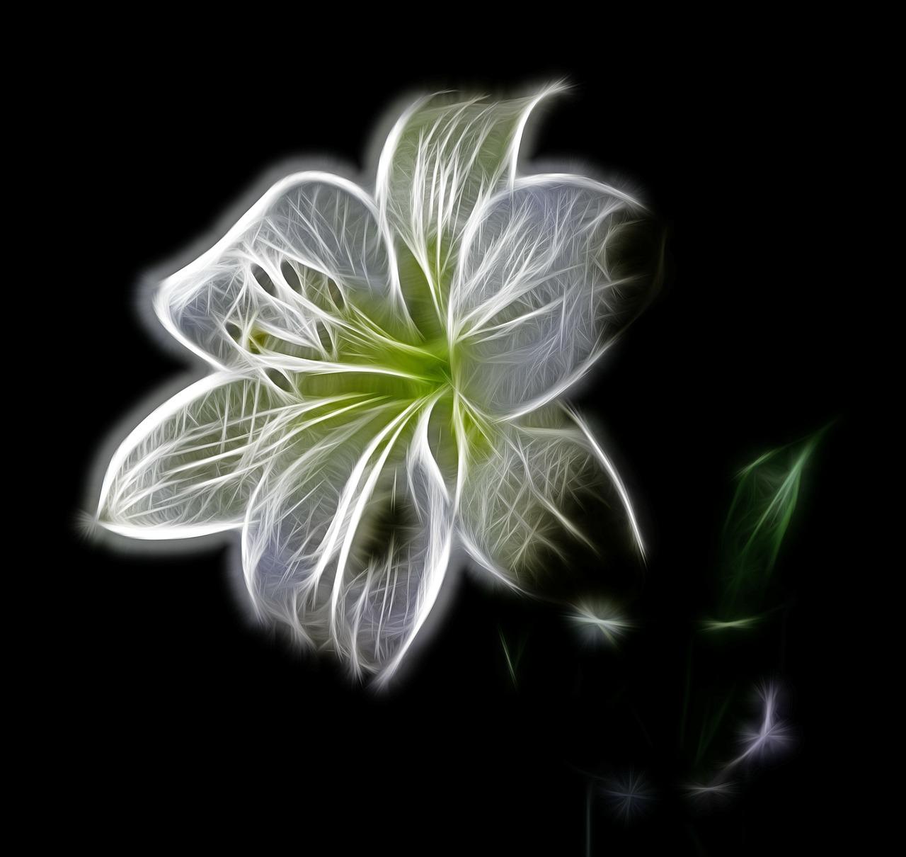 flor-blanca-brillante