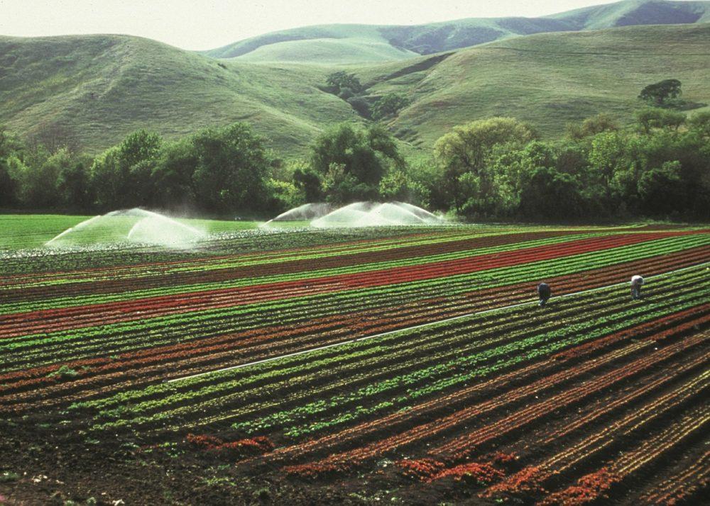 cultivos-arrendamientos-rusticos