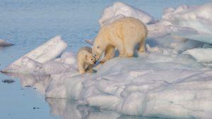 oso_polar