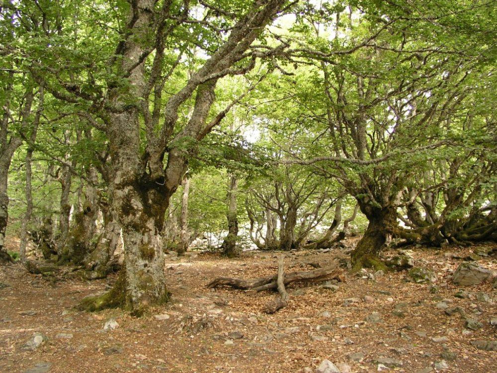 Bosque en Lugo
