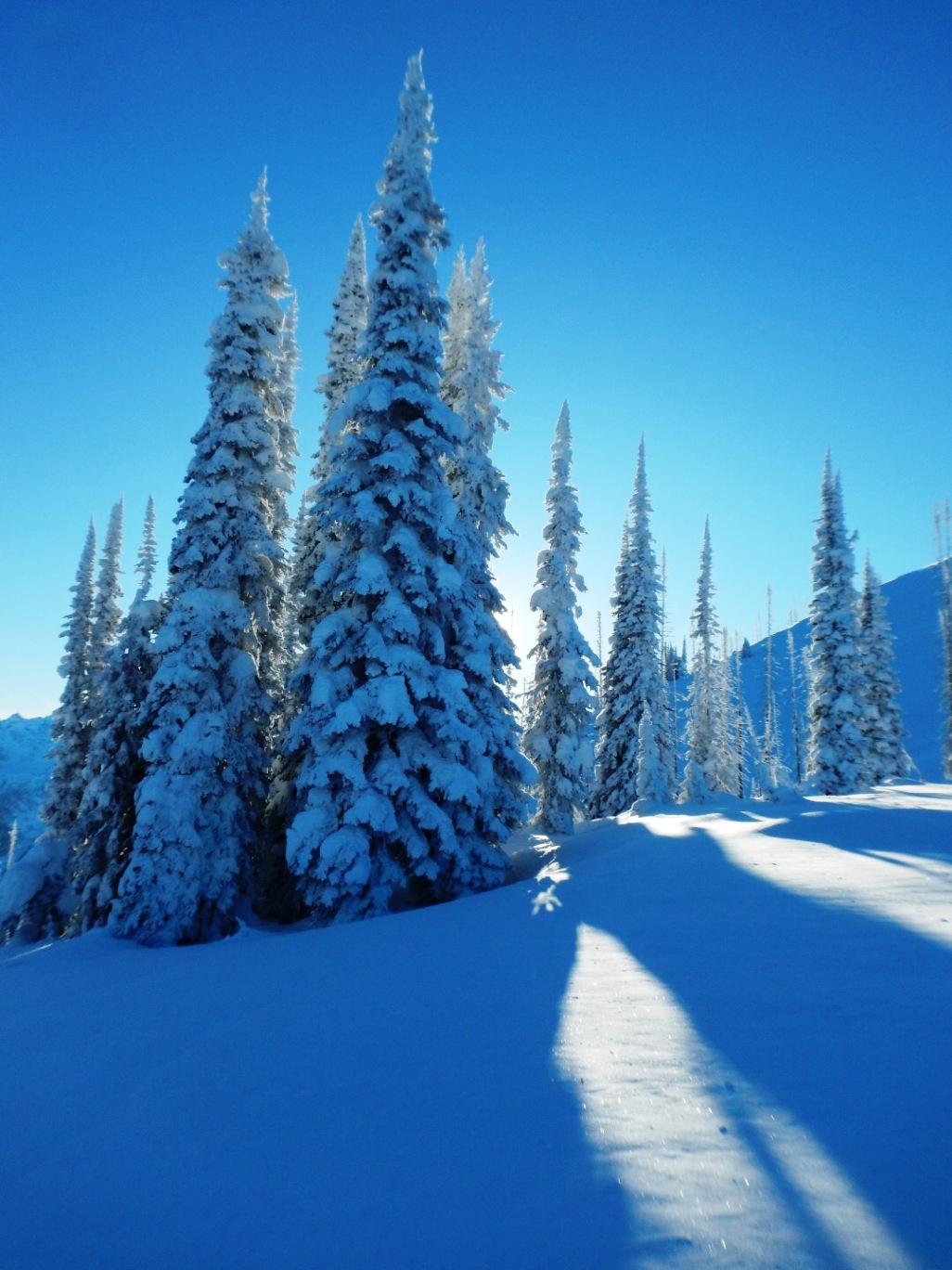 Canada abetos nevados notarios y registradores for Registro bienes muebles madrid